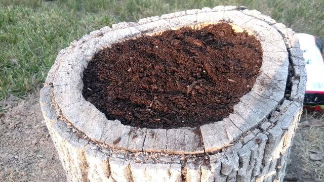 DIY-Tree-Stump-Plantrer