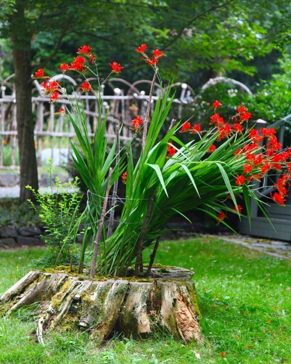 tree-stump-planter-ideas-10