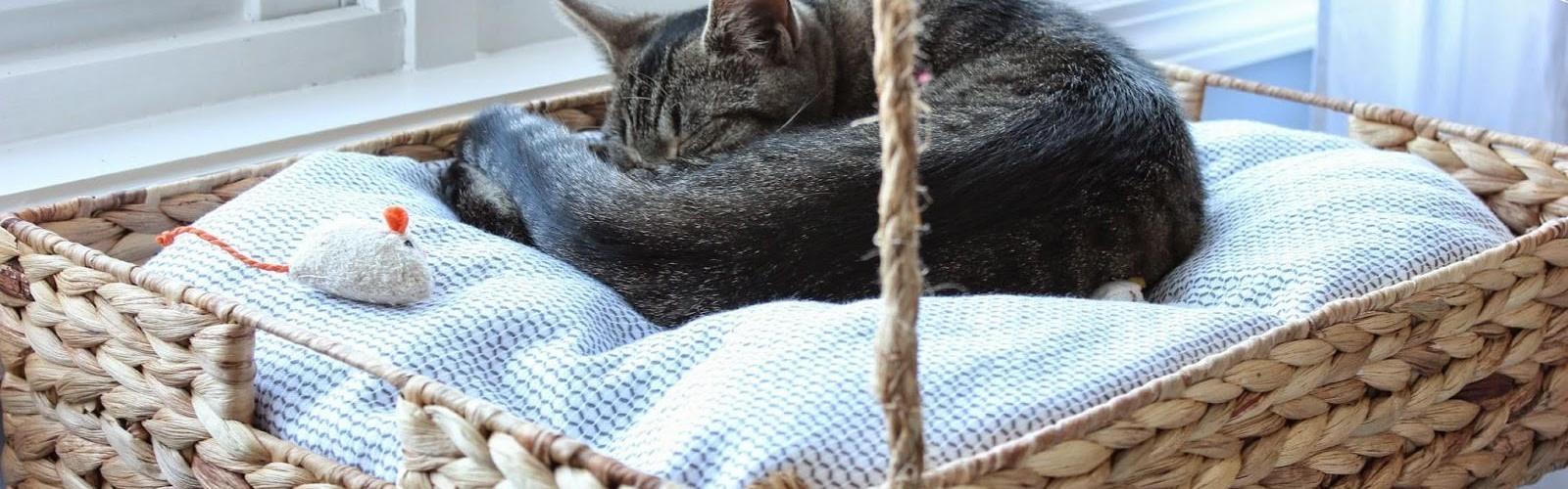 diy-hanging-window-basket-cat-bed