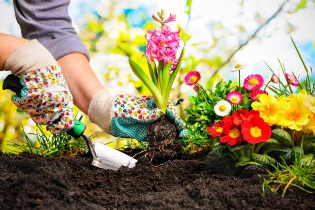 Easy To Grow Plants