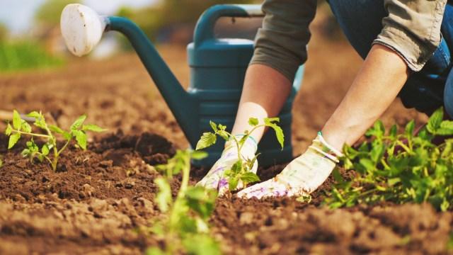 site selection for garden
