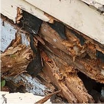 Dealing With Infestations and Rot in Floors and Stairs - Dry Rot