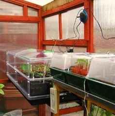 sowing seeds in a propagator