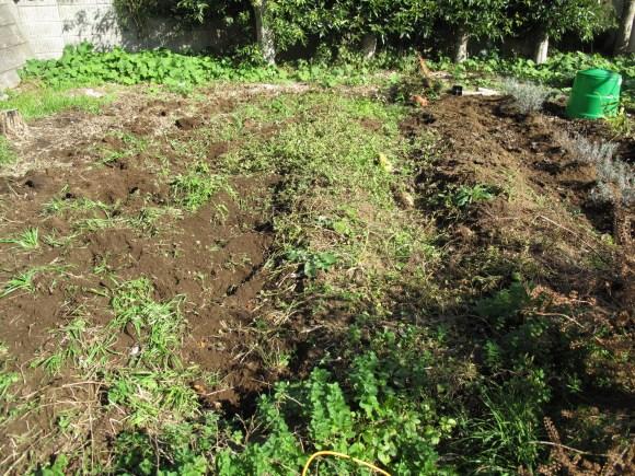 夏にトマトやナスを収穫しただけで放置プレイ中の my farm