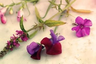 pressa blommor