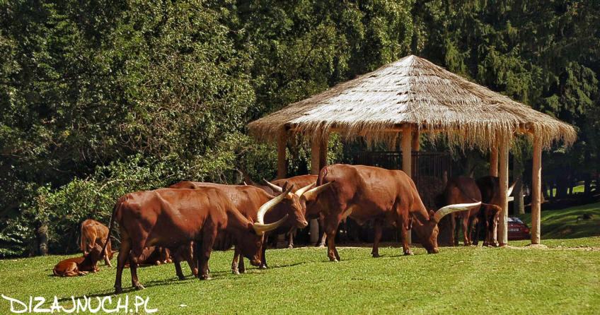 safari dvur kralove