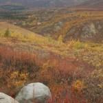 Northern fall, Yukon