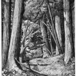 redwoods jpg1
