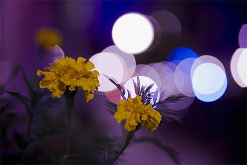 50 Amazing Examples of Bokeh Photography 43