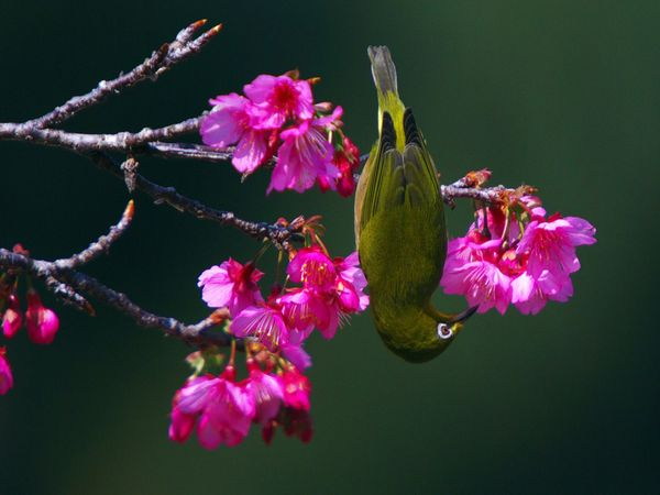 75 Beautiful Birds Photography for Inspiration 21