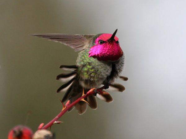 75 Beautiful Birds Photography for Inspiration 66