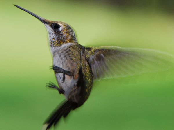 75 Beautiful Birds Photography for Inspiration 68