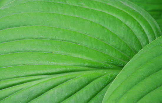 25 Most Useful Free High Resolution Leaf Textures 16