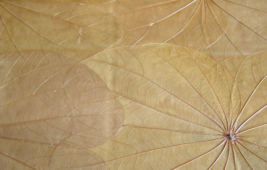 25 Most Useful Free High Resolution Leaf Textures 19