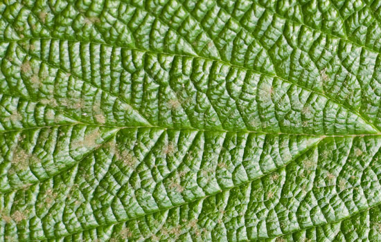 25 Most Useful Free High Resolution Leaf Textures 24