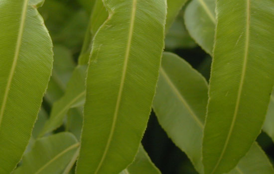 25 Most Useful Free High Resolution Leaf Textures 8