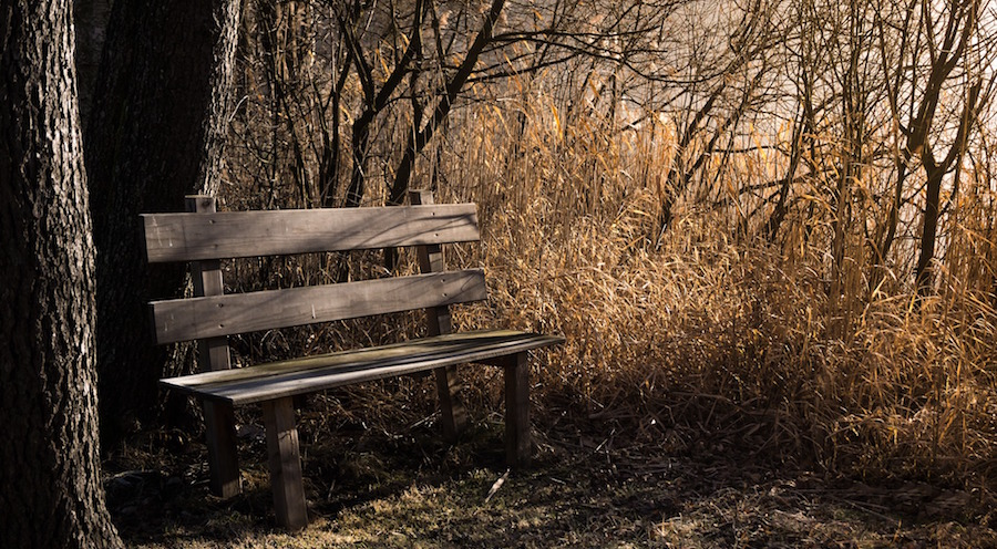 rest bench in nature