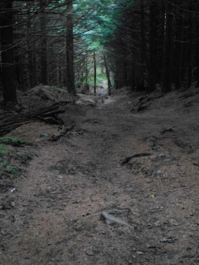 Typical trail section