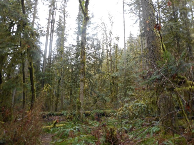 Squak forest