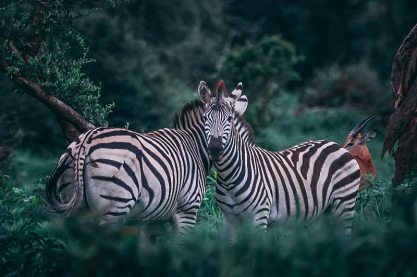 africagallery_6