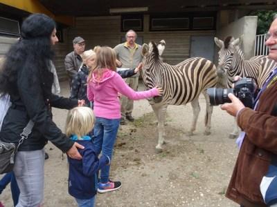 Presseverein Niederrhein-Ruhr wird Zebra-Pate. foto: Petra Grünendahl.