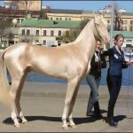The Best Asian Horse Breeds You Should Know Of Djwwgypsyhorses Com