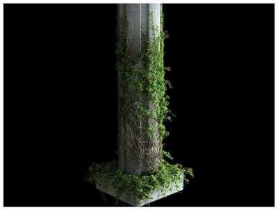 Ivy_Growth
