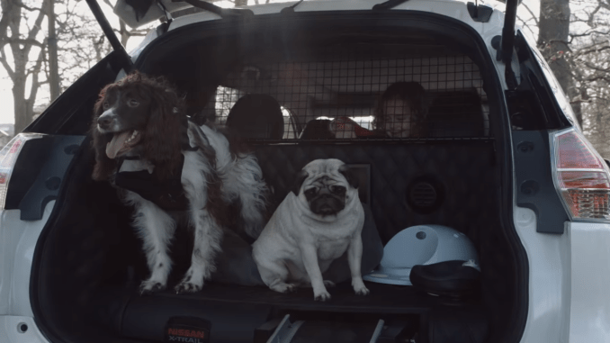 A car made just for dogs