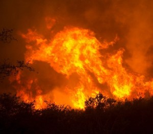 Dixie Fire Update: PG&E releases photos of tree suspected in starting fire