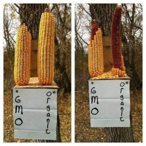Monsanto spends Millions to promote Pesticides, GMO Lies