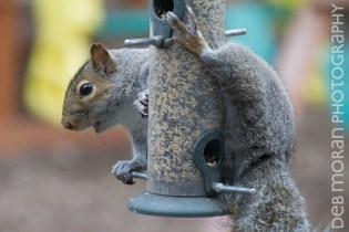 Squirrely Thief