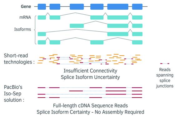 Transcriptome (RNA-Seq) – DNA Link Sequencing Lab