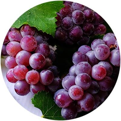 Grape Seed is one of the certified organic ingredients used in DNA Organics hair care and colour products