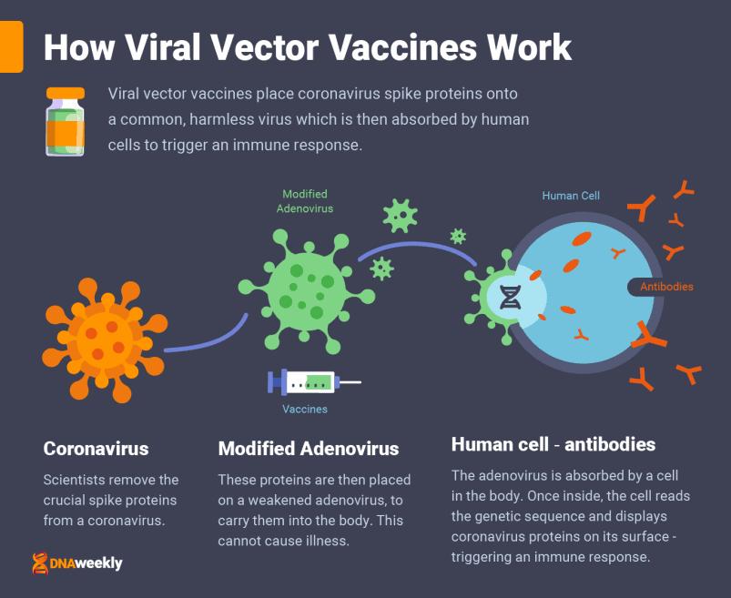 Vaccins contre le covid
