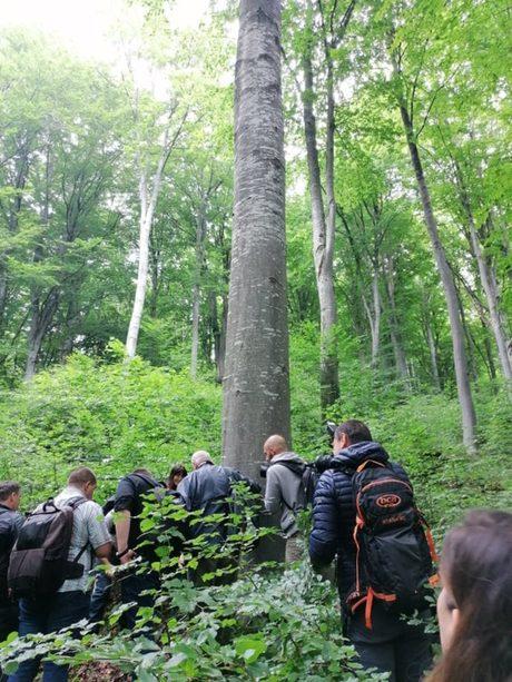 Запазването на старите гори е област, в която България не е на последно място