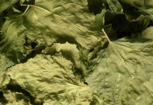 use-of-leaves-mulberry-leaves