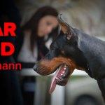 Lipar Land Dobermann kennel