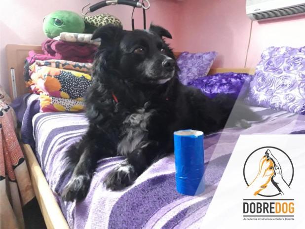 Progetto MiAffido - Addestramento cani d'assistenza per disabili motori