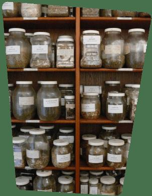 DocMisha Herb Jars