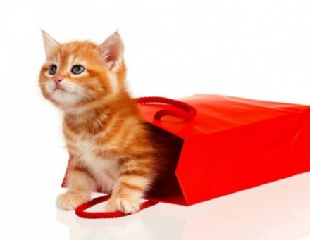 Cholesterol and Diabetes - Time to Let the Cat out of the Bag