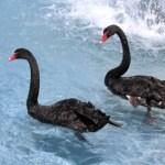 Alzheimer's Disease and Obesity – The Black Swan