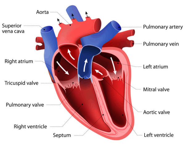 21 Important Questions and Answers About Heart Failure