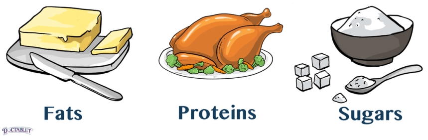 There are three main ingredients in food that provide energy -- fats, carbohydrates and proteins.