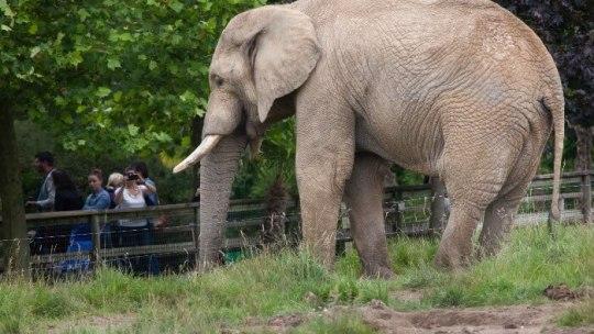 Comment organiser son séjour au zoo de Beauval?