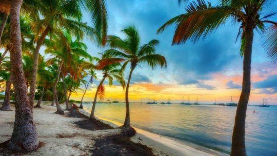 Que manger et boire en Guadeloupe ?