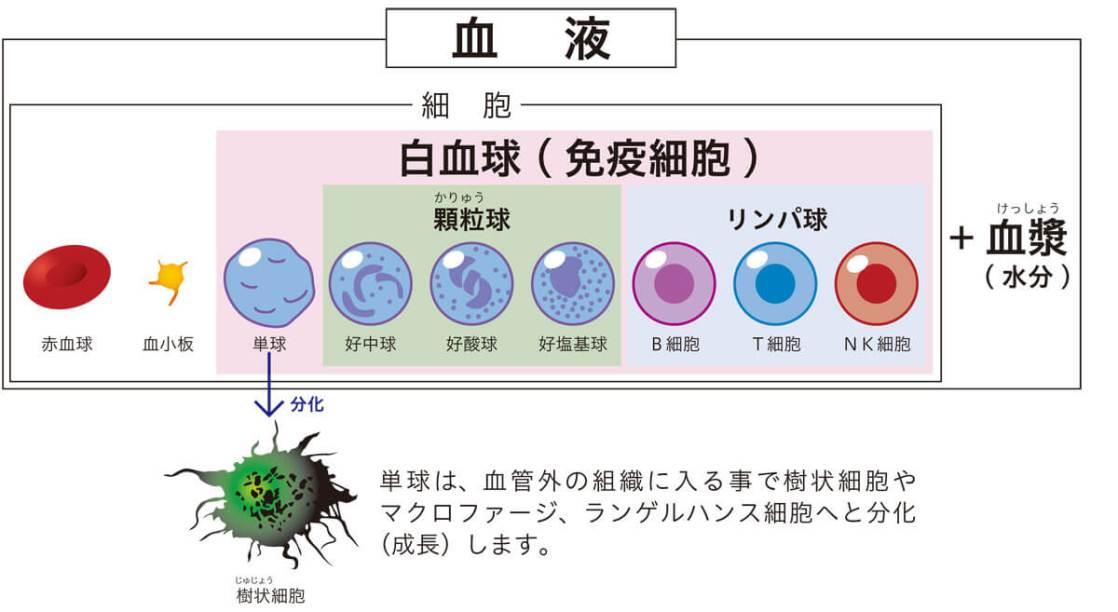 免疫細胞とは