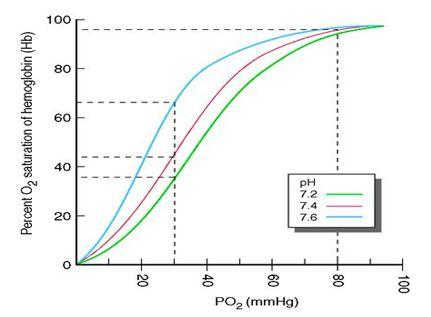 Saturación arterial de oxigeno a altitudes elevadas
