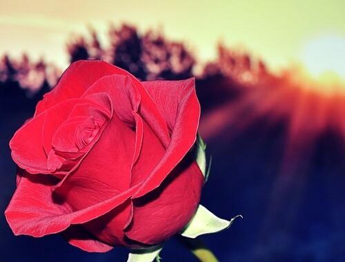 flower-first_date_advice-tips