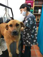 Baño y peluquería canina en Rionegro.