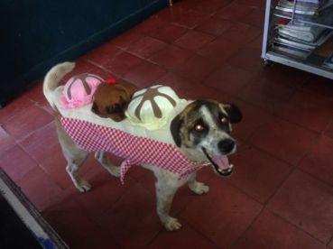 Perro disfrazado Banana Split
